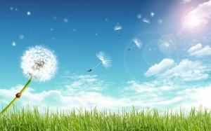 the-wind-carries-dandelion
